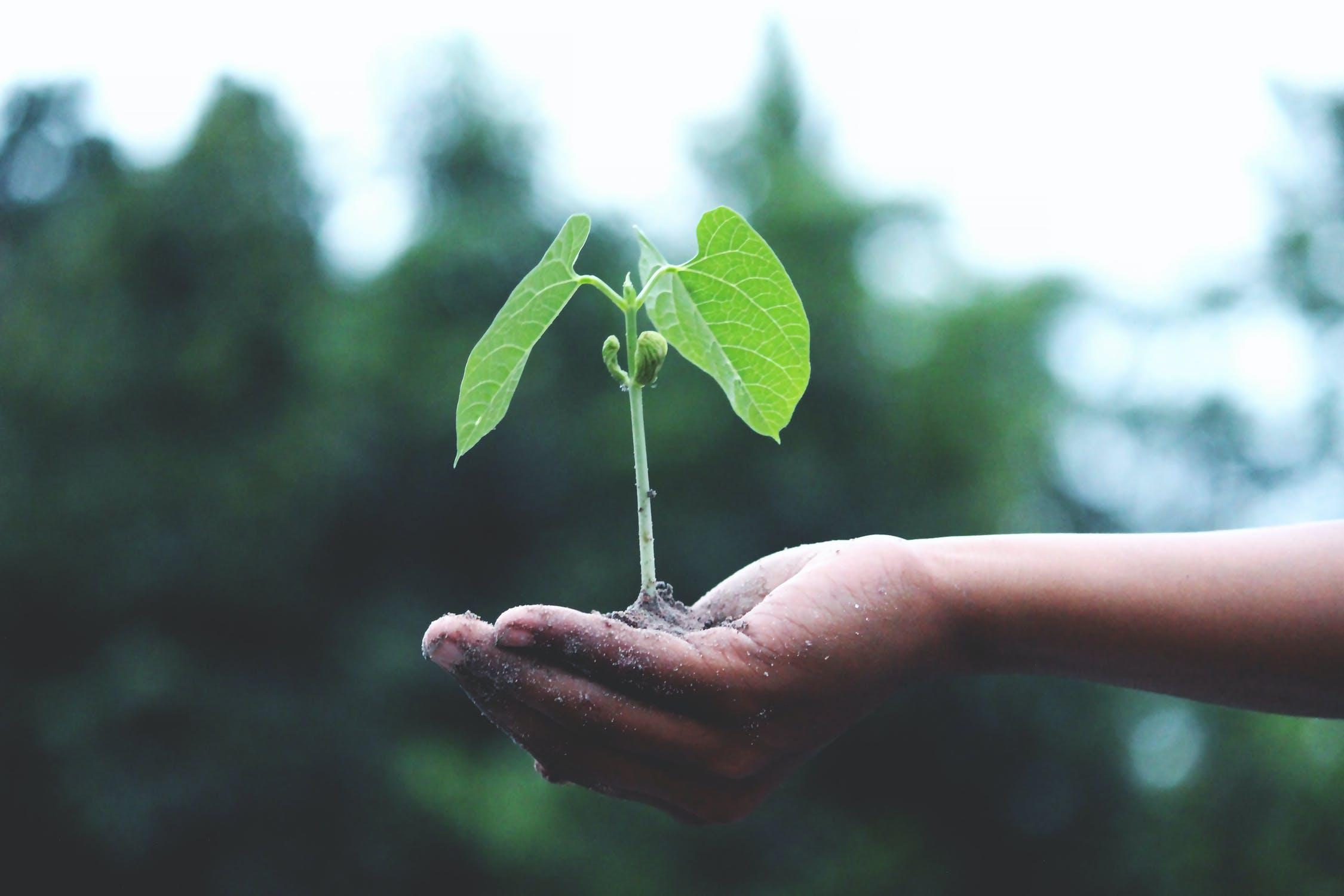 Fra grønnvasking til grønn vekst